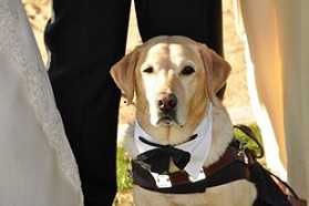Picture of Quinn looking dashing, wearing a bow tie at Randy and Tracy's wedding.
